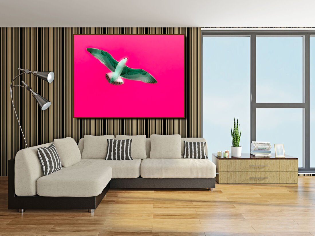 Royalty Free Bird Photos for Sale